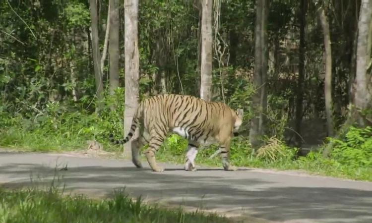 3 vườn thú safari ở Việt Nam